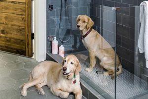 cani-nella-doccia